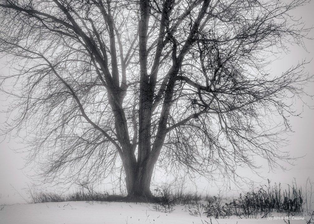 Foggy Tree II