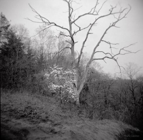 Dogwood and Deadwood