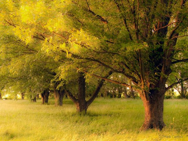 Trees At Twilight