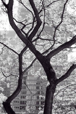 Chicago - Branches