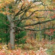 Forest's Edge - Allegan Forest, Allegan County, Michigan