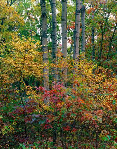 Autumn in Allegan
