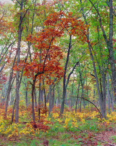 Sapling In Autumn