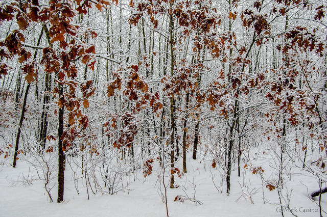 Wintry Thicket