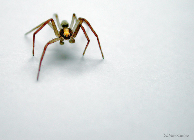 Photograph of Unknown Spider