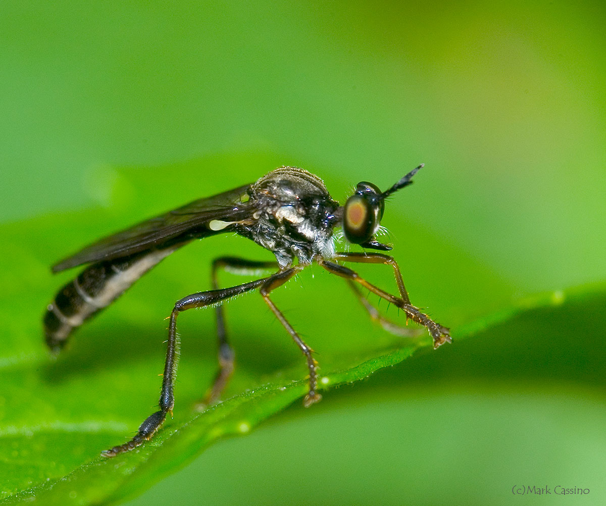 Close Up And Macro Photographs Of Insects And Spiders Of