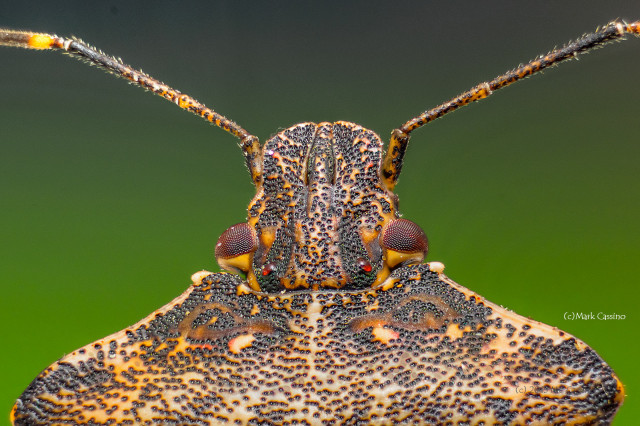 Focus Stacked Insect and Spider Macro Photographs