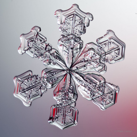 High magnification photo on af actual snowflake / snow crystal.