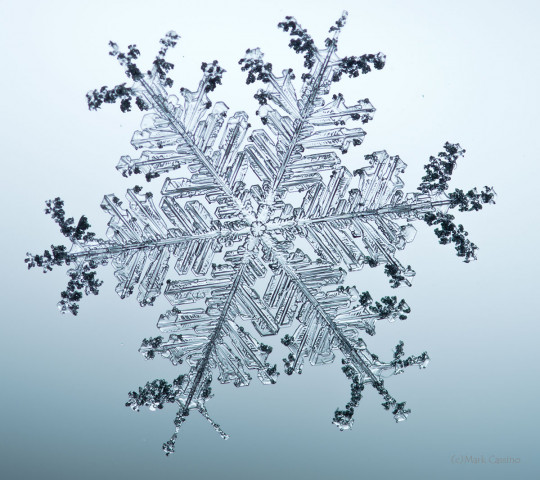 High magnification photograph of a real snowflake / snow crystal.