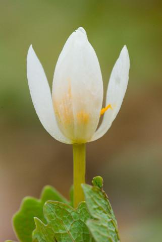 Wildflowers and Botanicals