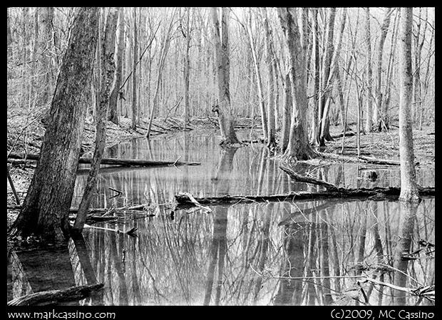 Dowagiac Woods